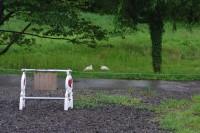 トキ保護センターに野生のトキが?