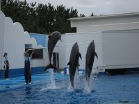 マリンピア日本海イルカジャンプ